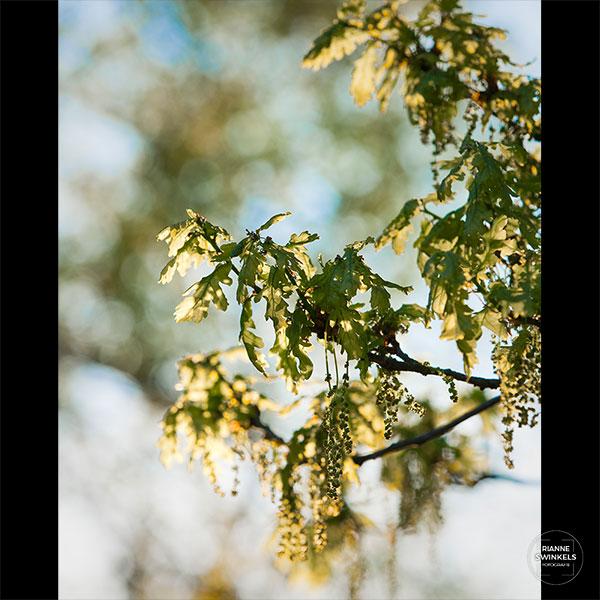 port_vrij-werk_lente-opti